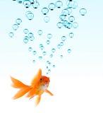 Goldfish e bolle Fotografia Stock