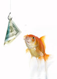 Goldfish e dollaro Fotografia Stock