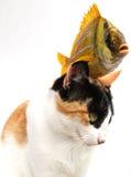 Goldfish e gato Fotos de Stock Royalty Free