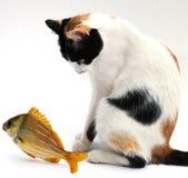 Goldfish e gato Fotografia de Stock Royalty Free