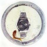Goldfish e tempo Imagens de Stock Royalty Free