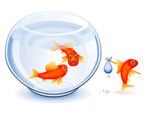 Goldfish emancipation. Goldfish moving from his fishbowl with bundle Stock Photo