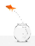 Goldfish escaping from fishbowl Royalty Free Stock Images