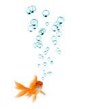 Goldfish et bulles Photographie stock