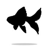 Goldfish fish black silhouette aquatic animal Stock Photography