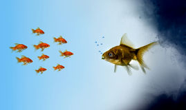 Goldfish fish in a polluted zone Stock Photography