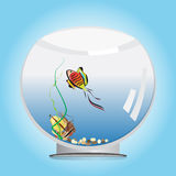 Goldfish in a fishbowl. A vector illustration of a colorful goldfish with long tail in a round fishbowl , with ship-toy, stones and seaweed on the bottom Stock Image
