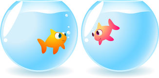 Goldfish fishes in love Royalty Free Stock Photography