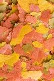 Goldfish Food Stock Image