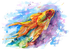 Goldfish. Fulfills only three wishes Royalty Free Stock Photography