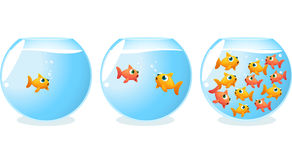 Goldfish generations fish tanks progression. Over time  illustration Royalty Free Stock Images