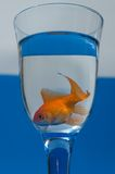 Goldfish in glass Stock Photos