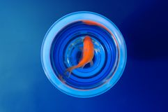 Goldfish in glass Royalty Free Stock Images
