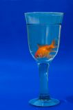 Goldfish in glass Royalty Free Stock Photos