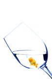 Goldfish in a glass royalty free stock images