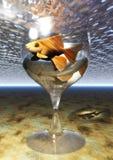 Goldfish Glass Royalty Free Stock Images