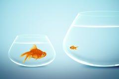 Goldfish grande y pequeño Fotografía de archivo libre de regalías