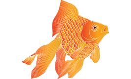 Goldfish drawing vector. Goldfish graphic, goldfish vector ,goldfish drawing Royalty Free Stock Photo