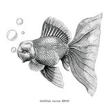 Goldfish hand drawing vintage engraving illustration Стоковые Фотографии RF