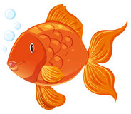 Goldfish with happy face. Illustration Royalty Free Stock Photo