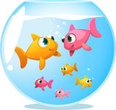 Goldfish happy family of six fish. Goldfish happy family, with mother fish and father fish staring at each other and 4 baby fish playing under them  illustration Royalty Free Stock Image
