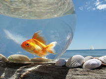 Goldfish on Holiday. A Goldfish in its aquarium on the beach, prisoner of this glass bubble royalty free stock photos