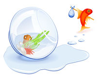 Goldfish Homeless Royalty Free Stock Photography