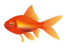Goldfish illustration Royalty Free Stock Images