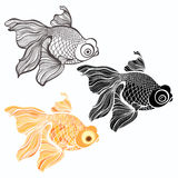 Goldfish,  illustration isolated on white background Stock Photography