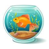 Goldfish im Aquarium Lizenzfreie Stockfotografie