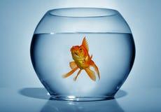 Goldfish In Bowl Stock Image