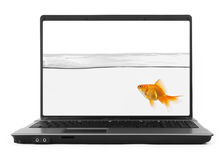 Goldfish inside notebook Royalty Free Stock Photo