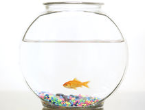 Goldfish in its bowl Royalty Free Stock Photo
