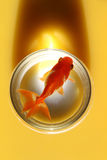 Goldfish in jar Stock Image