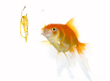 Goldfish and jewel royalty free stock image