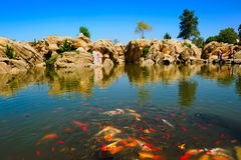 Goldfish jezioro Fotografia Stock