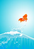 Goldfish jump. Beauty goldfish jump out of water Stock Photo