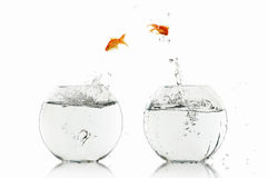 Goldfish Jump Stock Photography