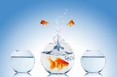 Goldfish jump stock photos