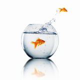 Goldfish Jump Stock Images