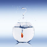 Goldfish jump Royalty Free Stock Photos