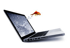 Goldfish jump out of the monitor. Photo of Goldfish jump out of the monitor Stock Photos