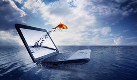 Goldfish jump out of the monitor at ocean Royalty Free Stock Photo