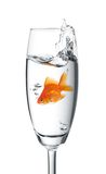 Goldfish jumped into a glass