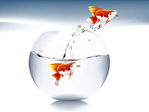 Goldfish jumping Stock Photos