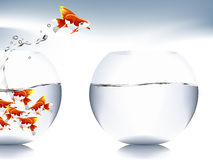 Goldfish jumping. A goldfish jumping out of the water to escape to freedom Stock Image