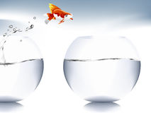 Goldfish jumping. A goldfish jumping out of the water to escape to freedom Royalty Free Stock Image