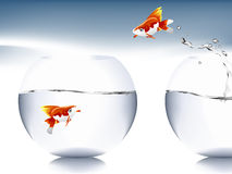 Goldfish jumping. A goldfish jumping out of the water to escape to freedom Royalty Free Stock Images