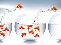 Goldfish jumping Royalty Free Stock Images
