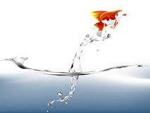 Goldfish jumping. A goldfish jumping out of the water to escape to freedom Stock Photo